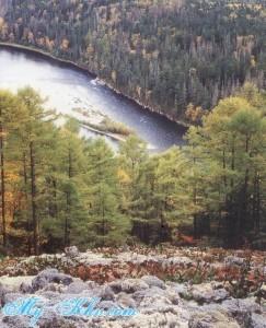 Леса Хабаровского края и Хабаровска